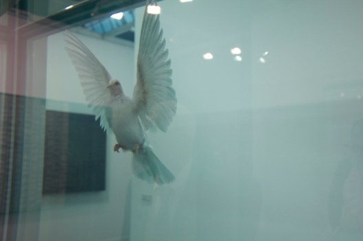 Damien Hirst the incomplete truth 2007, White cube gallery