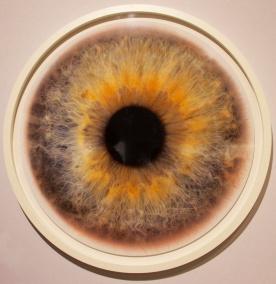 rankin- Eyescape unknown 8- A. galerie